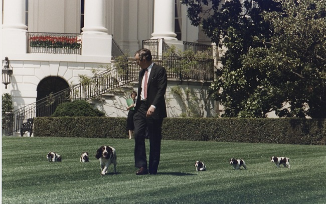 President George H.W. Bush with dogs