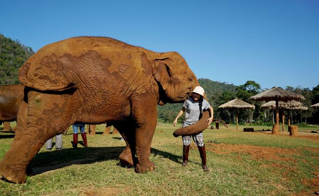 LEK-with-elephant