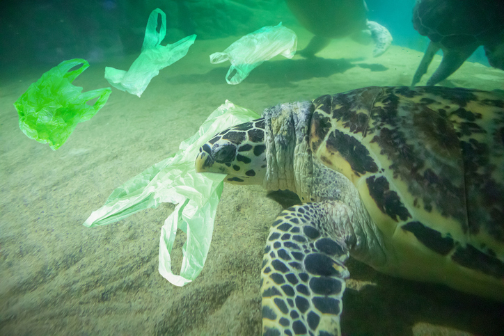 sea turtle eating a plastic bag in the ocean