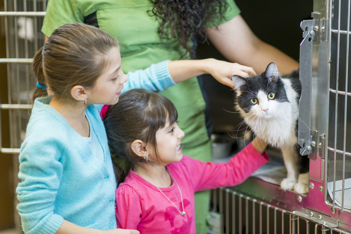 people at an animal shelter looking at a cat