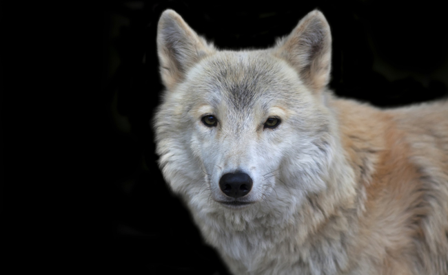 Photo Credit: Olga Gladysheva/Endangered Species Coalition