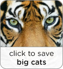 Save Big Cat Habitat
