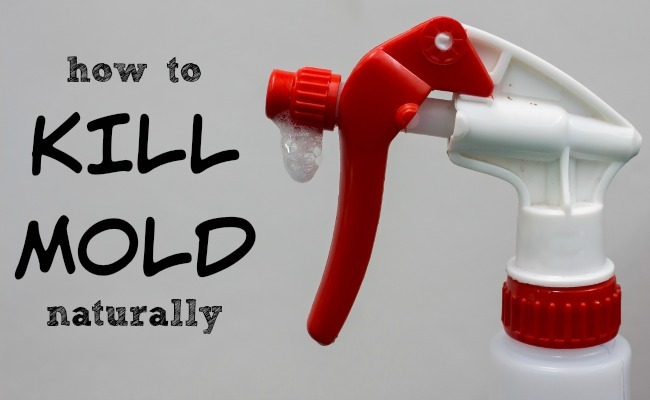 3 Ways To Kill Mold Naturally