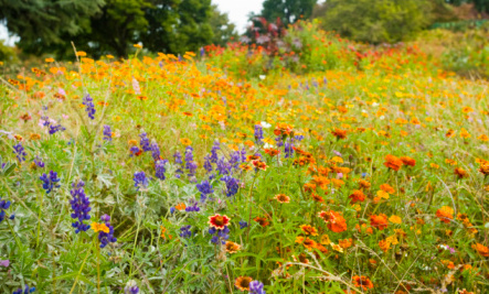 Beautiful Wildflower Gardens