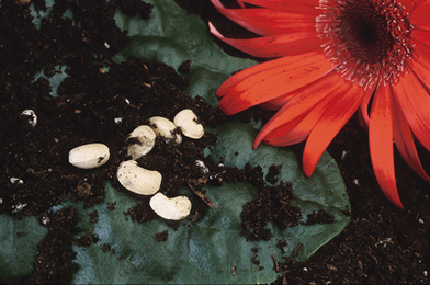 Why it Matters to Buy Heirloom Plants and Seeds