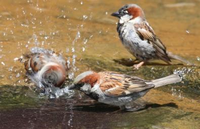 Birdscaping Your Backyard