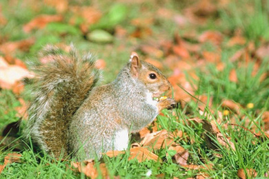 Inspiring Conversation–With a Squirrel!