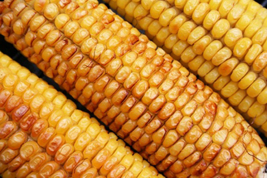 Native american corn in the coals recipe care2 healthy living native american corn in the coals recipe forumfinder