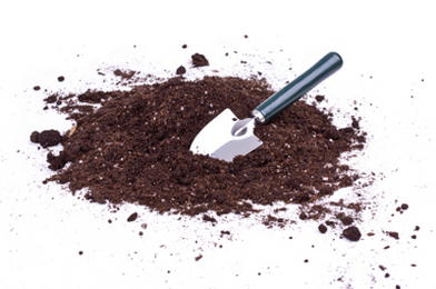 Coffee Grounds Perk Up Soil and Plants