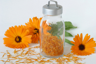 Soothe Your Skin with Homemade Calendula Oil