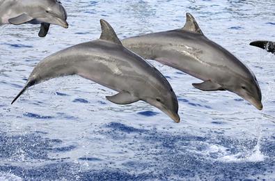 3 Stories of Dolphin Saviors