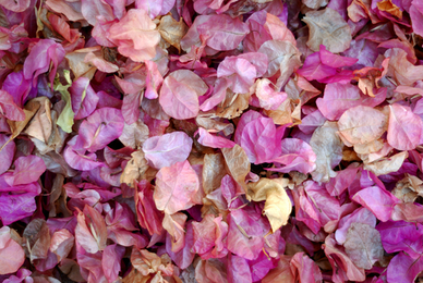 How to Dry Flowers and Botanicals