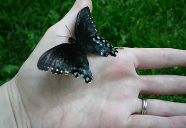 Releasing Butterflies: Dos and Dont's