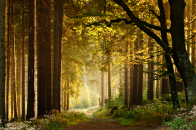 Primordial Sound: Nature's Finest Vibrations