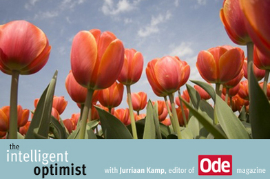 Invest in Sustainability: The Need for Tulips