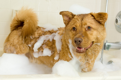 Smelly Dog Royalty Free Stock Images - Image: 28859359