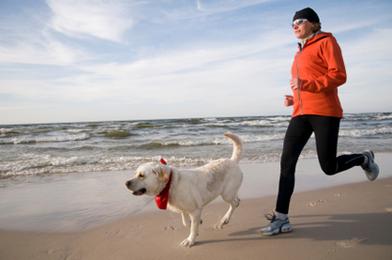 comment faire les entraînements avec mon chien?