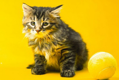 Holistic Treatment for Your Cat's Bladder Infection