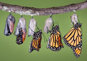 Transformation Through Spiritual Process