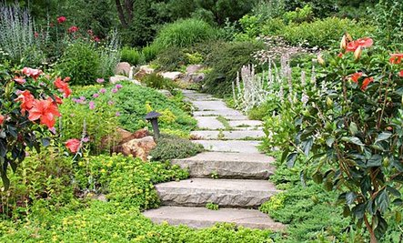 13 Tips To Create Your Own Healing Garden