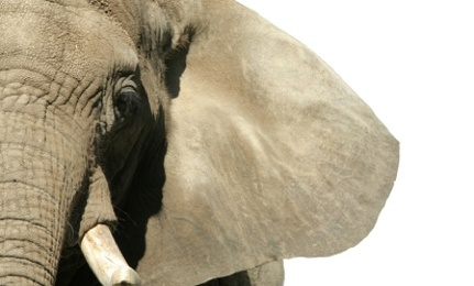 Unnatural States: The Ethics of Zoo Going