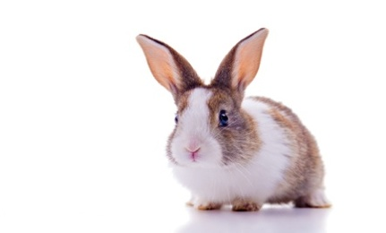 No Animal Testing? Deceptive Beauty Labels
