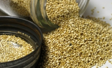 7 grains to add to your diet care2 healthy living 7 whole grains to add to your diet ccuart Gallery