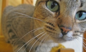 10 Fantastic Cat Facts (slideshow)