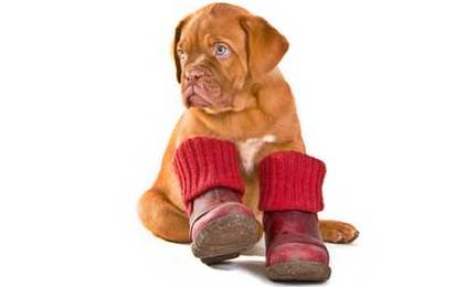 Does Your Dog Need Boots Diy Dog Booties With Pattern And
