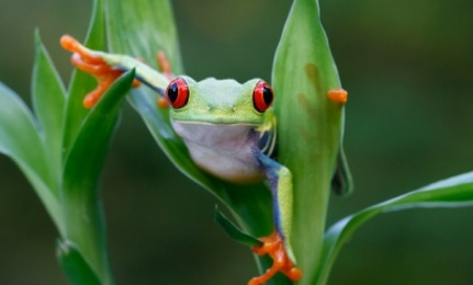 Image result for care2 green frog