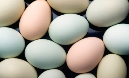 What About an Egg's Color?