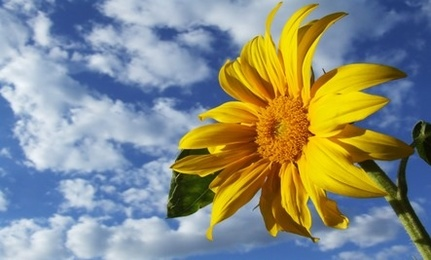 Flower Power: For Memory and Depression