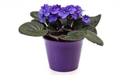 8 Hard to Kill Houseplants