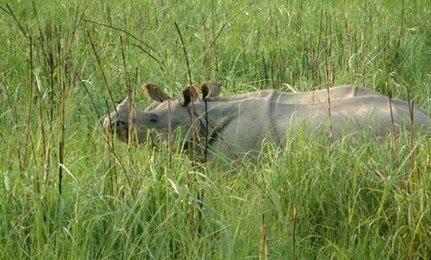 Nineteen Poachers Arrested for Killing Rhinos