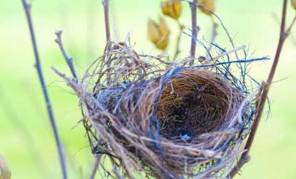 For Every Bird An Empty Nest: A Knitted Nest To Make