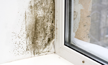 4 Reasons Why Your Damp House is Wrecking Your Health