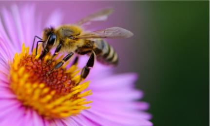 Bee-friendly Lands