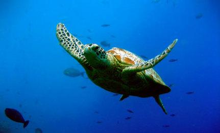 5 Human Habits Harmful to Ocean Health