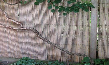 Outdoors: Instant Bamboo Fencing