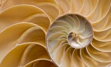 Positivity Quest: The Spirals in Relating