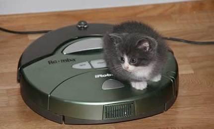Cat On A Vacuum Video