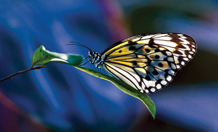 Biomimicry: Designed By Nature