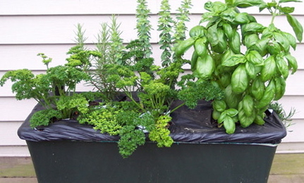 Grow Food in a Shoebox
