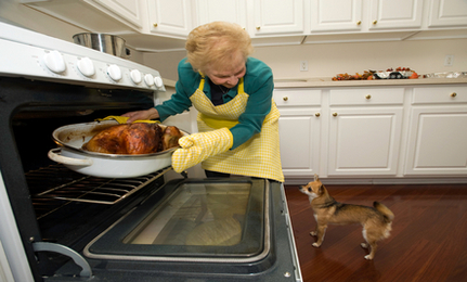 Safety Tips for Dogs During Thanksgiving