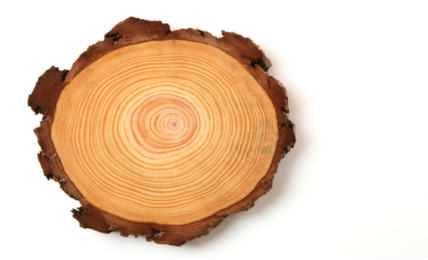 How to Find Sustainable Wood Sources