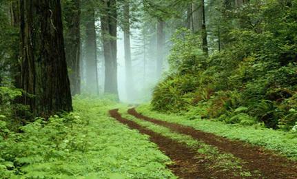 Pathways To Self-Healing