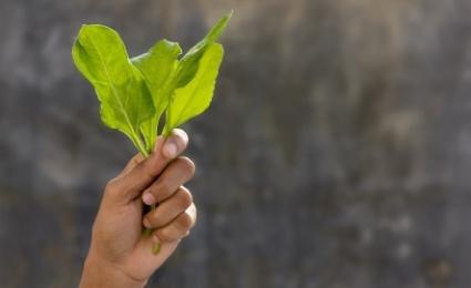 Dark Green Vegetables and Meditation