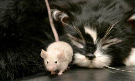 ba0b32fff9b Best Humane Mouse Traps | Care2 Healthy Living
