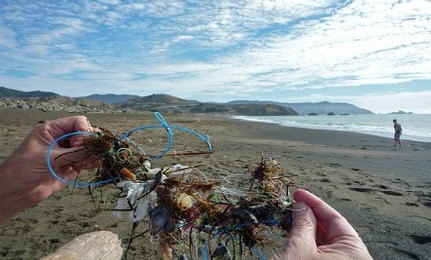 3 Artists That Are Cleaning Up Ocean Pollution