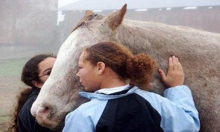 Healing with Horses
